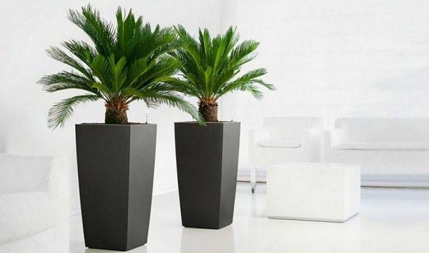 Plant Uk